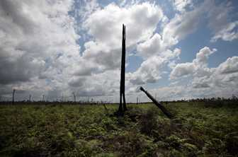 A burnt out tree stands where an entire forest used to, in Central Kalimantan, Indonesia. Photo by Josh Estey for AusAID