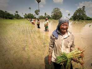 Women work hard in the rice paddies in Cambodia. Photo by Kevin Evans for AusAID