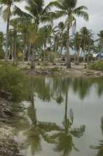 A coastal village among the coconut palms in Kiribati. Photo by Lorrie Graham for AusAID