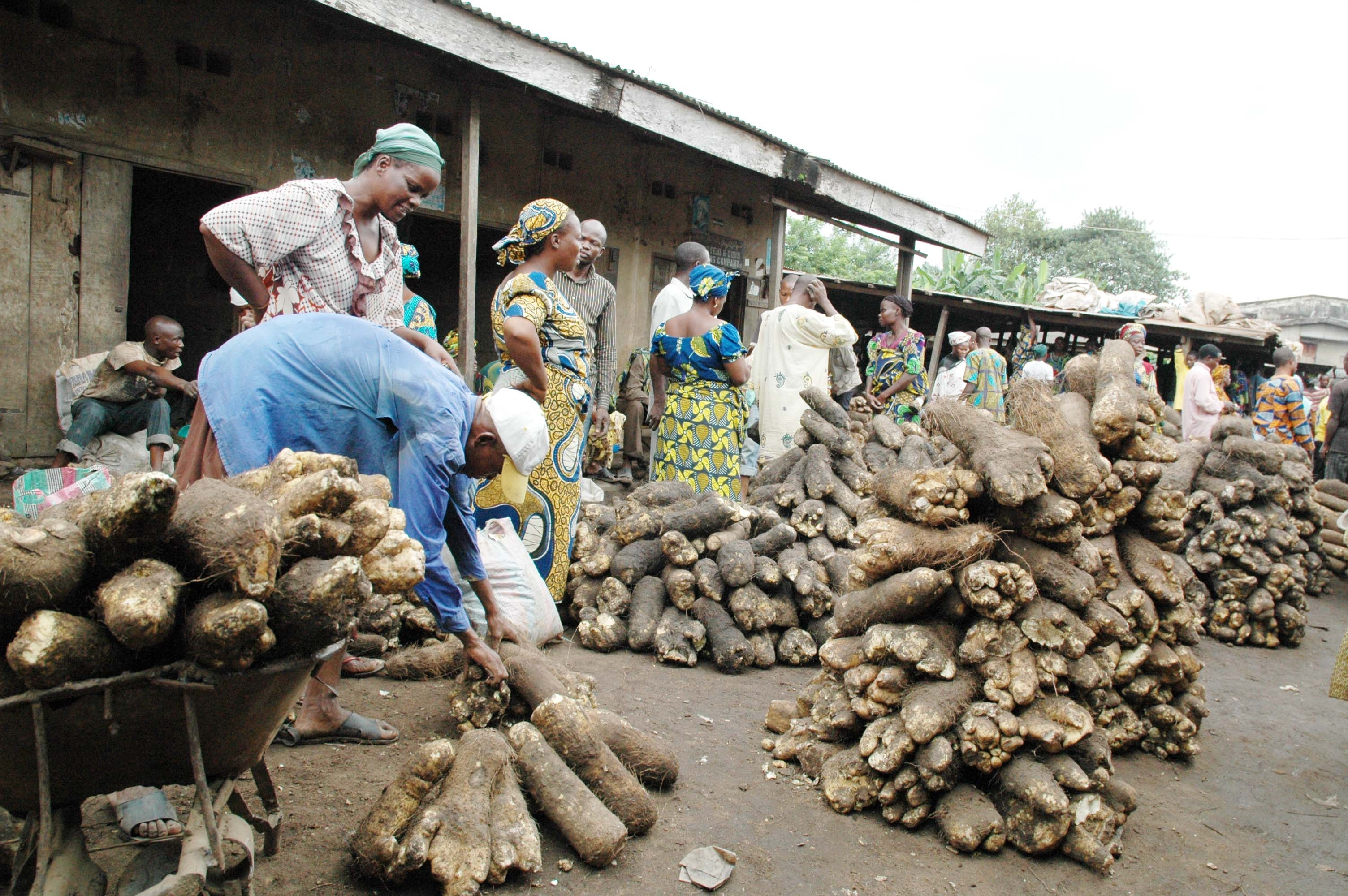 People buy manioc at the Bodija Yam market in Ibadan, Nigeria. Photo © News Agency of Nigeria/Xinhua Press/Corbis