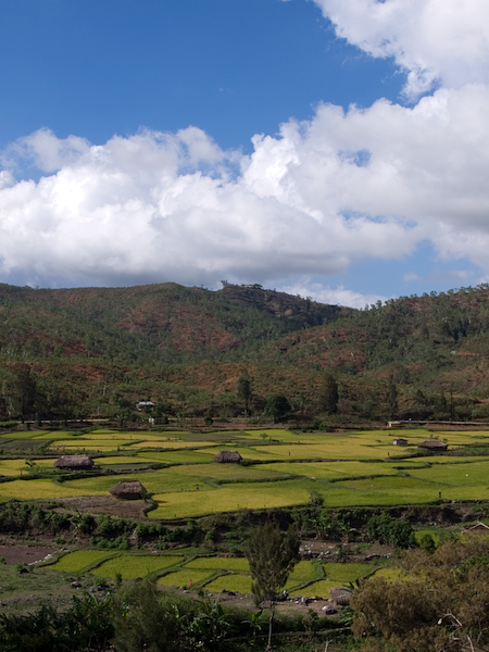Rice fields in the Aileu Valley, Timor-Leste, 47 kilometres south-west of the capital, Dili Photo by Nick Hobgood / Wikimedia http://creativecommons.org/licenses/by-nc-nd/2.0/