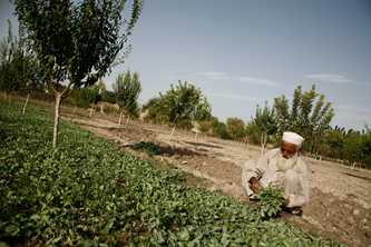 Aid is helping to improve agricultural practices and food security, reduce poverty and build resistance to droughts and floods Photo by Afghanistan Reconstruction Trust Fund