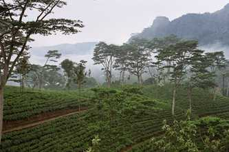 The rainfall, humidity and cool temperatures of Sri Lanka's central highlands produce high quality tea and earn the country valuable income. Photo by Anjadora / Wikimedia http://creativecommons.org/licenses/by/2.0/deed.en