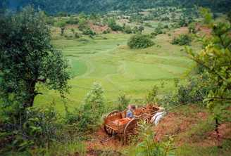 A farmer with a traditional bullock dray surveys rice terraces in the eastern Shan area of Myanmar. Photo by Doron/Wikimedia CC BY-SA 3.0 licence