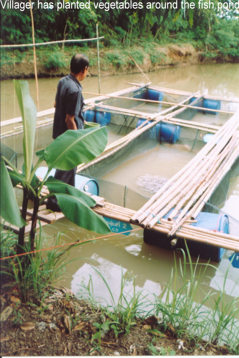 At this Thai fish farm, fish are raised in floating baskets and vegetables are planted around the ponds, providing improved food security for families. Photo from World Vision Australia