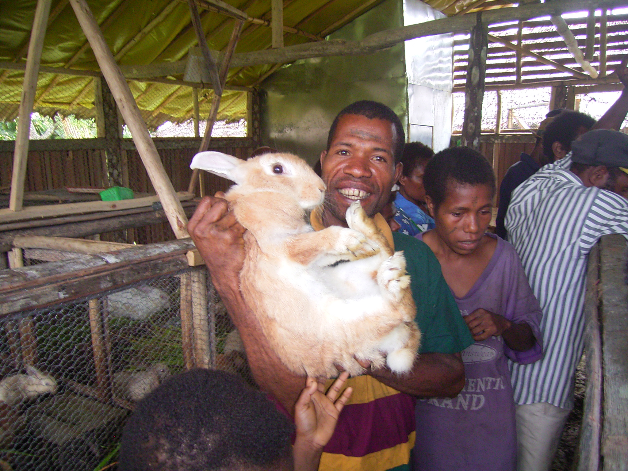 Rabbit farming has replaced the hunting of tenkile and provides a good source of food. Photo by Jean Thomas/TCA