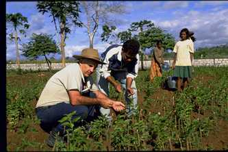 Father Pat MacAnally and villagers care for the young mulberry plants in Timor-Leste. Photo by David Haigh for AusAID