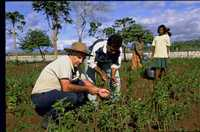 Father Pat MacAnally and villagers care for the young mulberry plants in Timor-Leste.