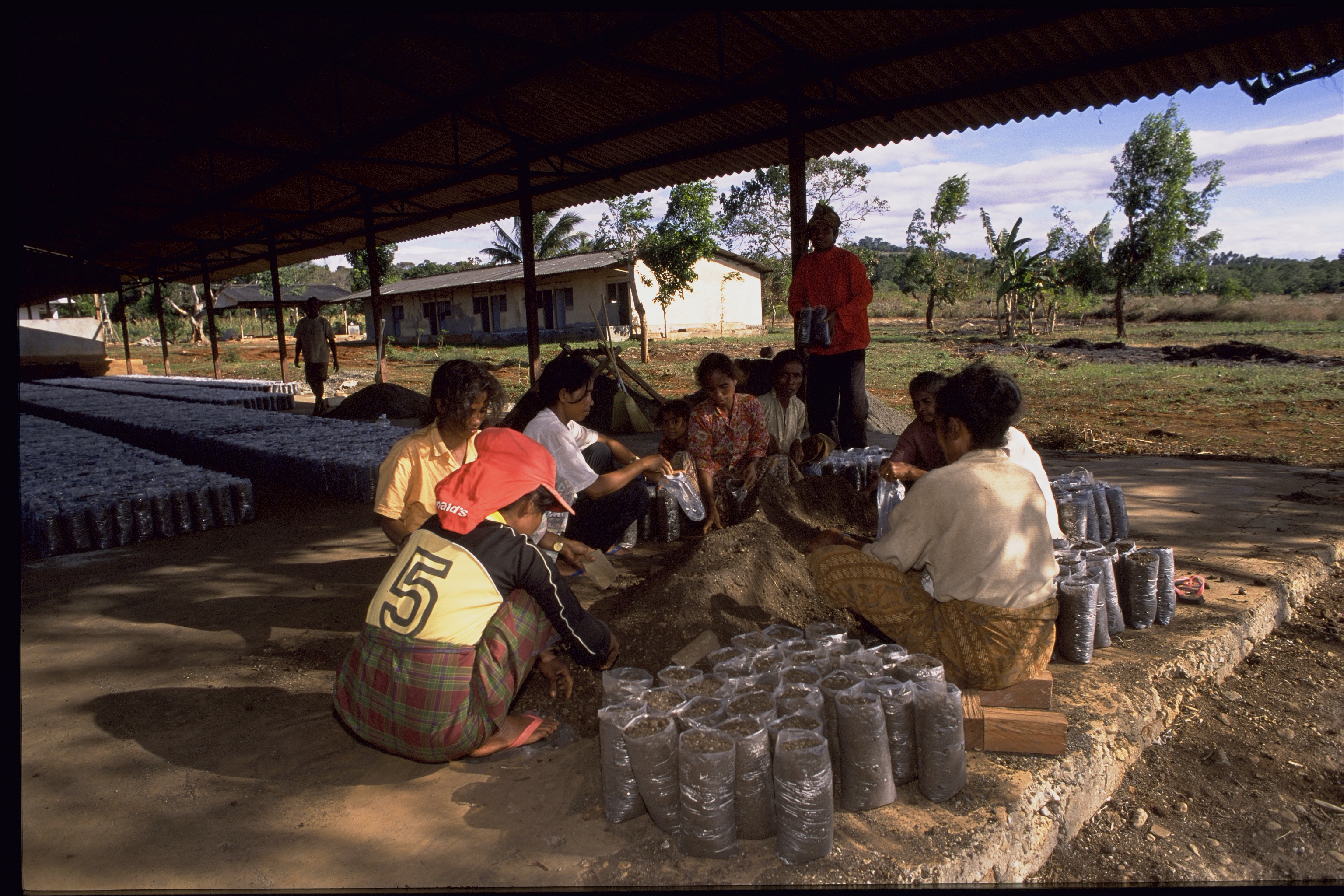 Villagers prepare the mulberry seedlings in the newly built sheds. Photo by David Haigh for AusAID