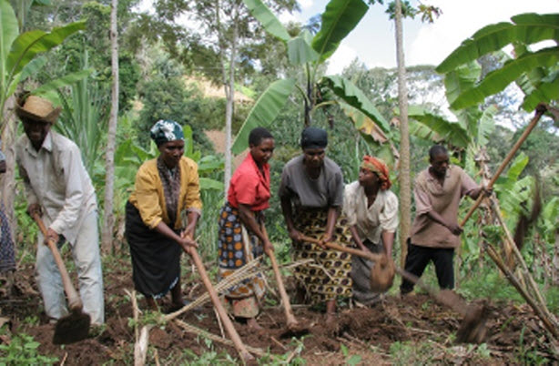 Families work together to prepare soil for planting vegetables and trees. Sean Sprague, Caritas