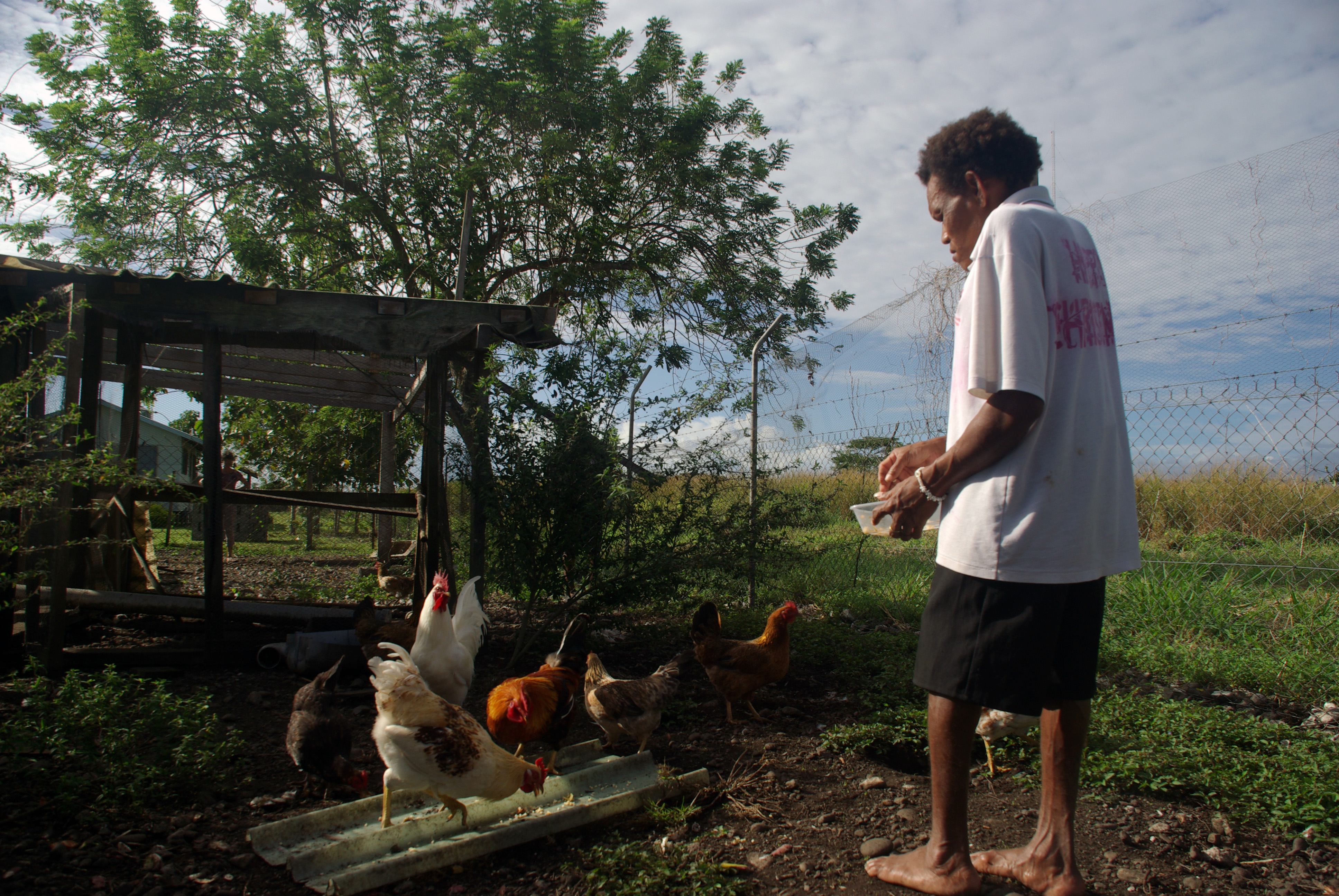 A student feeds chickens as he learns how to care for them and generate an income kept at his school in Solomon Islands. Photo by Irene Scott for DFAT