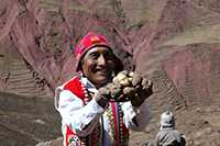 Practical Action is helping families living in high-altitude areas of Peru to maintain biodiversity by developing varieties of potatoes. This means they get enough to eat and can make a small income. Practical Action/Ana Castaneda