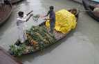 Selling pineapples from a boat on the river, Bangladesh.