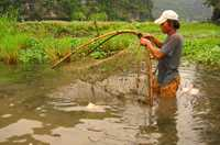 A man lowers his fishing net into the river to catch fish for his family's evening meal in Vietnam.