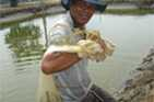 Farmers are trained to produce more and better quality fish and prawns in their aquaculture ponds in Aceh, Indonesia.