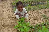 A young boy squates next to baobab seedlings.