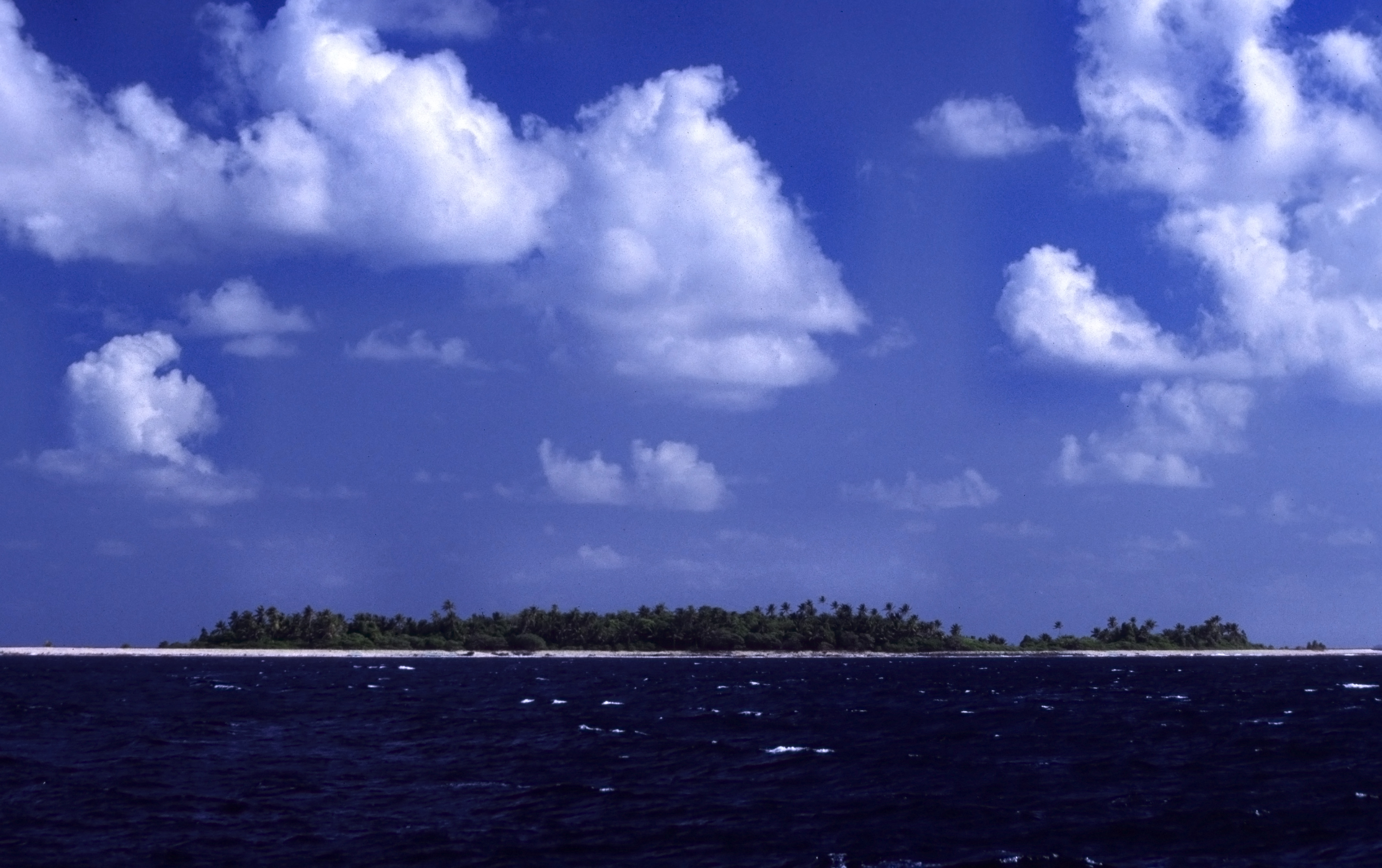 Coconut trees are the highest thing on the low-lying islands of Tuvalu and provide valuable food and drink for people. Photo by Anjadora / Wikimedia http://creativecommons.org/licenses/by/2.0/deed.en