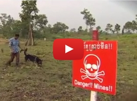 This video outlines the mine clearance programs currently operating in Laos and Cambodia. As well as clearing mines and making the land usable for farming the video looks at how assistance and education is needed for victims of mines and those living in landmine-affected areas.